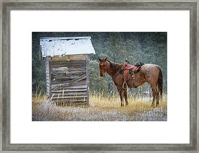 Trusty Horse  Framed Print by Inge Johnsson