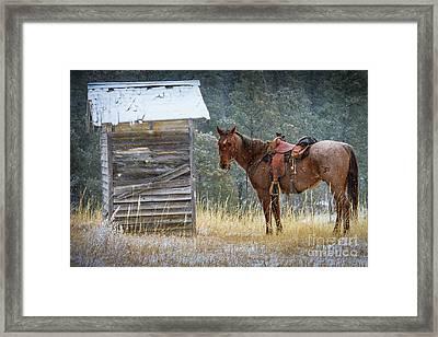 Trusty Horse  Framed Print