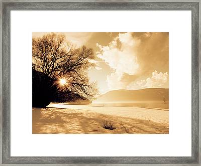 Truth In The Tree Framed Print by Scott Ballingall