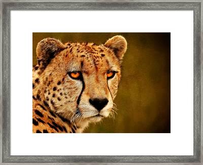 Try Me Framed Print by Ricky Barnard