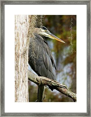 Trying To Blend In Framed Print