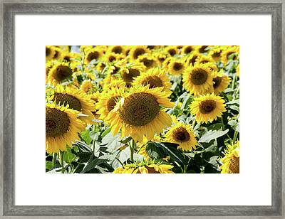 Framed Print featuring the photograph Trying To Feel Unique by Greg Fortier