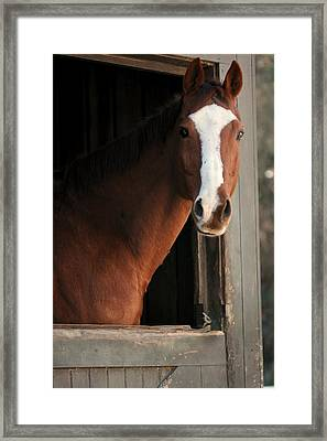 T's Window Framed Print by Angela Rath