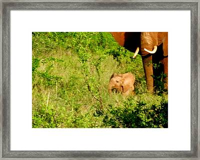 Tsavo Calf Framed Print
