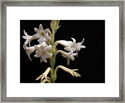 Framed Print featuring the photograph Tuberose by Charles Ables