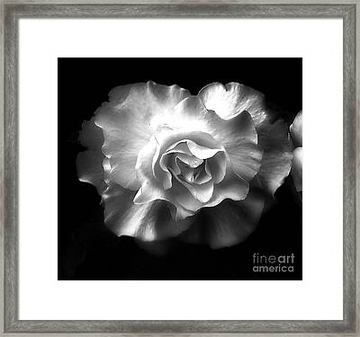 Framed Print featuring the photograph Tuberous Begoonia by Ann Jacobson