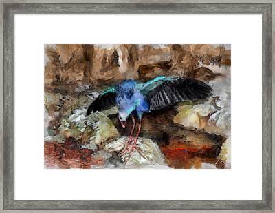 Mullet, Sultan Chicken Framed Print by Sergey Lukashin