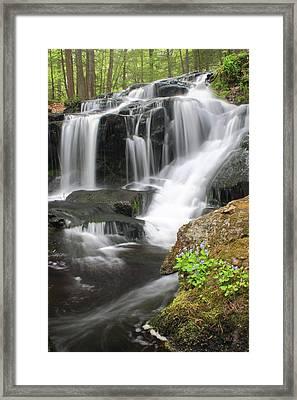 Tucker Brook Falls And Violets Framed Print by John Burk