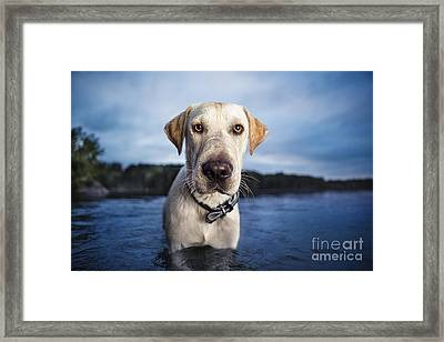 Tucker Framed Print by Leslie Leda