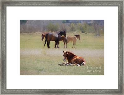 Framed Print featuring the photograph Tuckered Out by Benanne Stiens