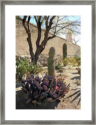 Tucson Morning Framed Print