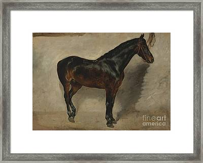 Tudy Of A Brown-black Horse Tethered To A Wall Framed Print