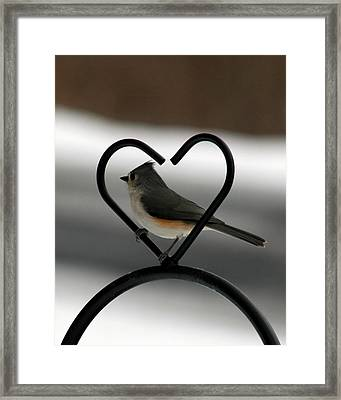 Tufted Titmouse In A Heart Framed Print