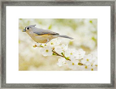 Tufted Titmouse With Seed Framed Print