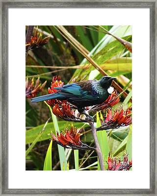 Tui In Flax Framed Print