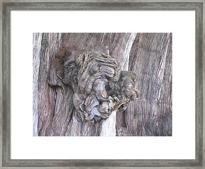 Tule Tree Spirit Framed Print by Michael Peychich