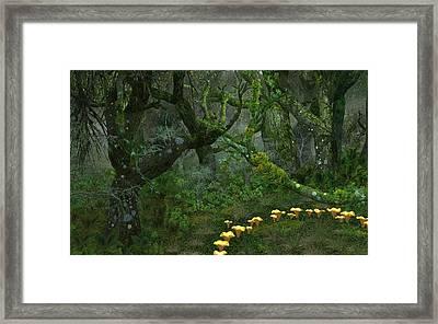 Tulgey Wood Framed Print by Diana Morningstar