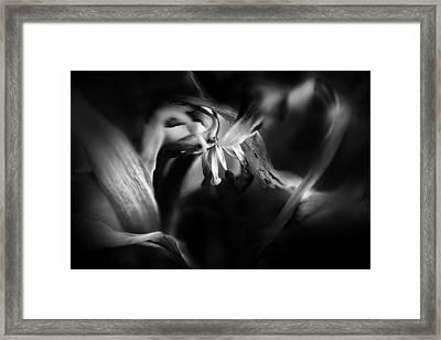 Tulip 05 Framed Print by Nora Batternay