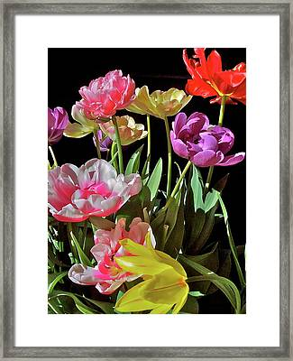 Framed Print featuring the photograph Tulip 8 by Pamela Cooper