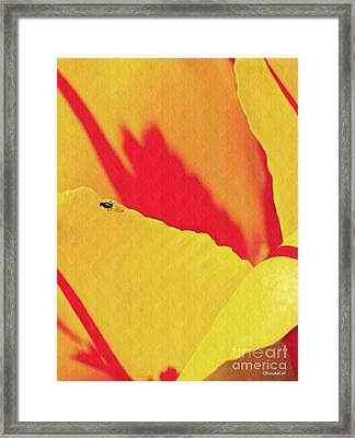 Tulip Abstract 2 Framed Print