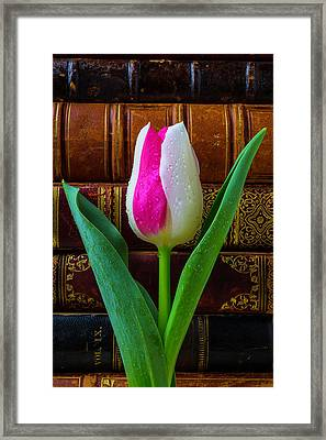Tulip And Antique Books Framed Print