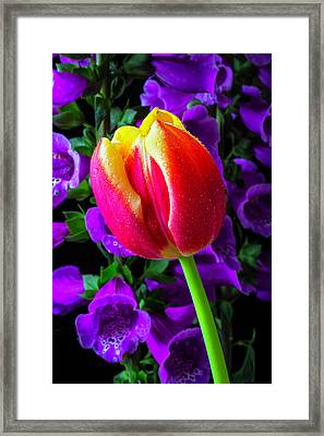 Tulip And Foxglove Framed Print by Garry Gay