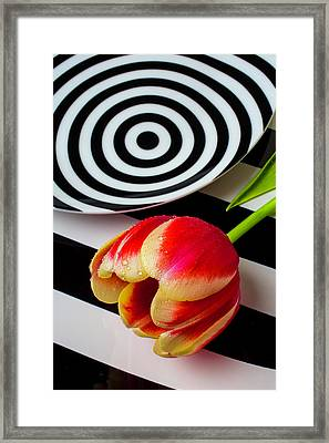 Tulip And Graphic Plates Framed Print by Garry Gay