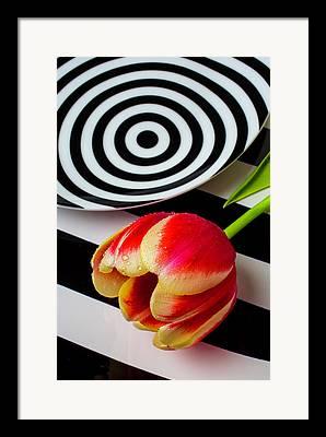 Dotd Framed Prints