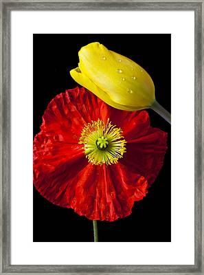 Tulip And Iceland Poppy Framed Print by Garry Gay
