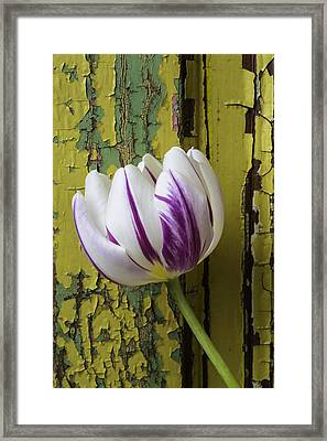 Tulip And Old Wall Framed Print