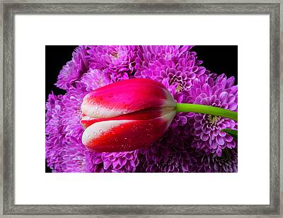 Tulip And Pompons Framed Print