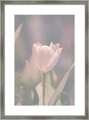 Framed Print featuring the photograph Tulip by Bob Orsillo