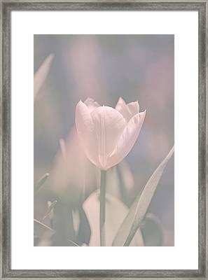 Tulip Framed Print by Bob Orsillo