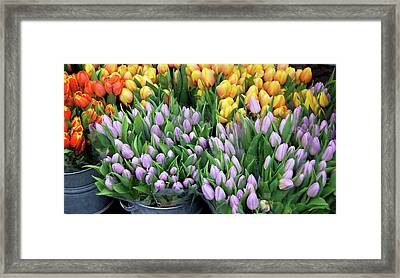 Tulip Bouquets For Sale Framed Print by JAMART Photography