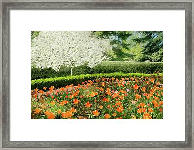 Framed Print featuring the photograph Tulip Cafe by Diana Angstadt