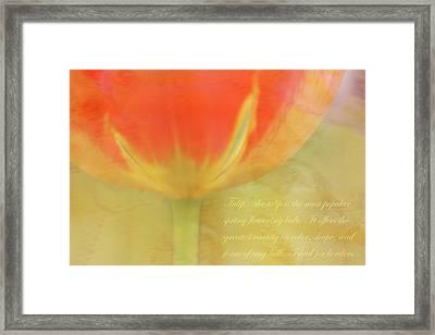 Tulip Framed Print by Catherine Alfidi