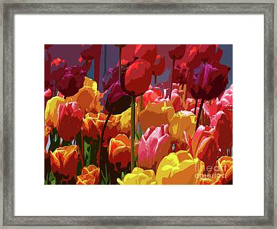 Tulip Confusion Framed Print by Sharon Talson