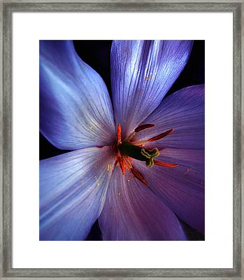 Framed Print featuring the photograph Tulip Convert by Gwyn Newcombe