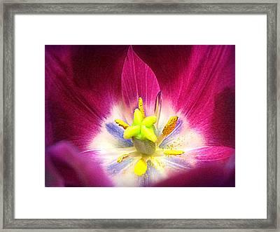 Tulip Drama Framed Print