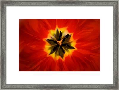 Tulip Explosion Kaleidoscope Framed Print