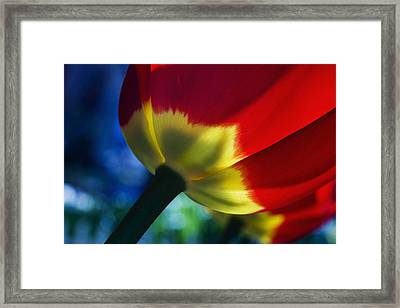 Tulip Expression Wide Framed Print by Shawn Young