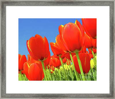 Tulip Field Framed Print by Giancarlo Liguori