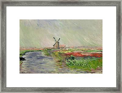 Tulip Field In Holland Framed Print