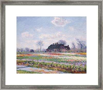 Tulip Fields At Sassenheim Framed Print by Claude Monet