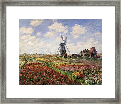 Tulip Fields With The Rijnsburg Windmill Framed Print by Claude Monet