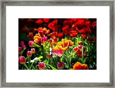 Framed Print featuring the photograph Tulip Flower Beauty by Alexander Senin