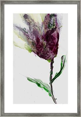 Tulip For Canada Day Framed Print by Cynthia Matthews