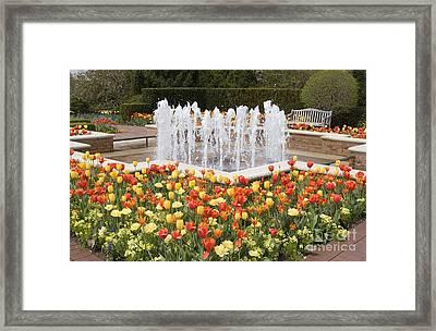 Tulip Garden Framed Print by Elvira Butler