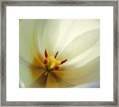 Framed Print featuring the photograph Tulip Glow by Gwyn Newcombe