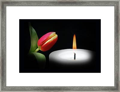 Tulip In Candle Light. Framed Print by Terence Davis
